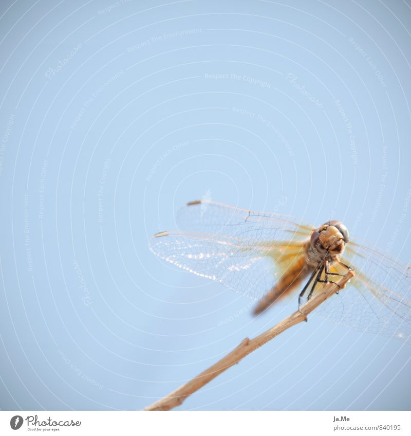 Cheese :) Himmel Natur blau Tier gelb Luft glänzend gold Wildtier Flügel Freundlichkeit Neugier Insekt Tiergesicht Interesse Libelle