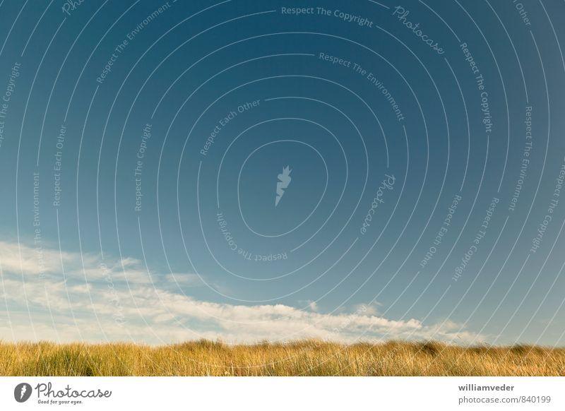 Horizont mit Dünengras, blauem Himmel und Wolkenstreifen Natur Ferien & Urlaub & Reisen Pflanze Sommer Sonne Meer Erholung ruhig Landschaft Ferne Gras Küste
