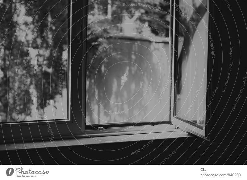 fenster zum hof Natur Baum dunkel Fenster Wand Mauer Garten Luft Wohnung Raum Häusliches Leben Fensterscheibe Fensterblick aufmachen lüften