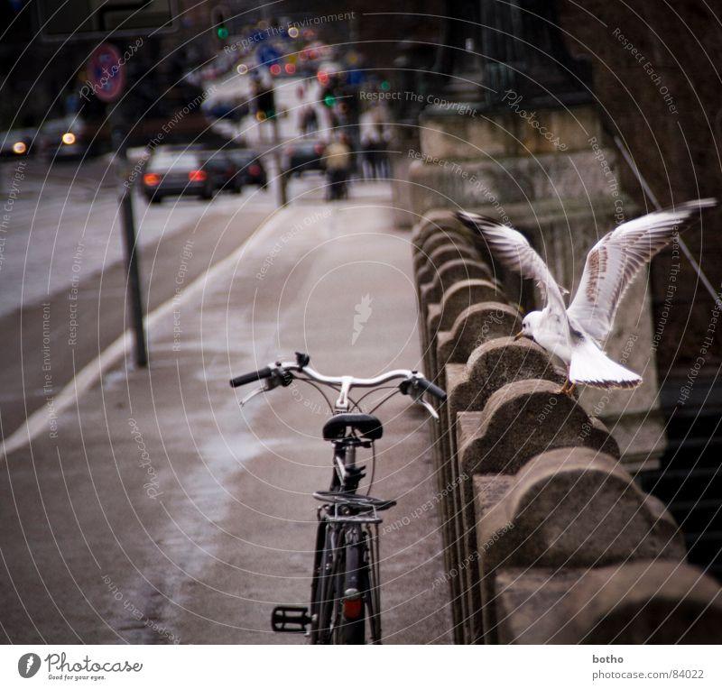 Knut und Möwe Fahrrad Verkehr Vignettierung Ampel Vogel Straßennamenschild Angriff Fahrzeug Flugplatz Verkehrsmittel Fernstraße Verkehrswege Straßenverkehr