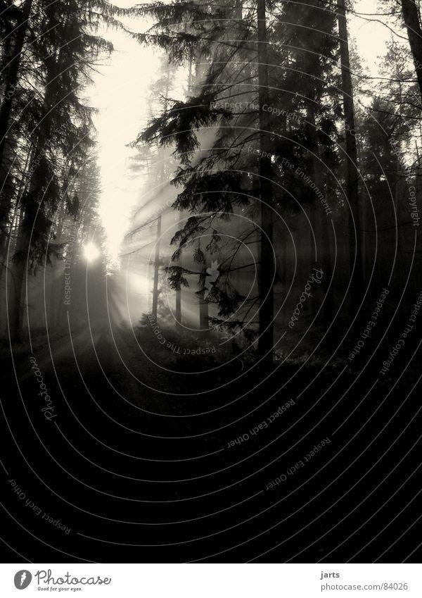 Licht Baum Sonne Ferne Straße Wald dunkel Wege & Pfade hell Nebel Tanne wegfahren Himmelskörper & Weltall Lichtstrahl