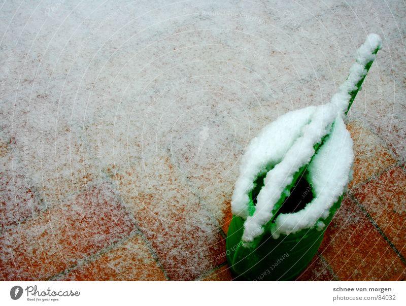 eingeschneit Regen Gießkanne Kannen Balkon grün Blume stehen tauen Schlamm Gras Blumenstrauß Grünfläche Schneeschmelze entladen gießen Dienstleistungsgewerbe