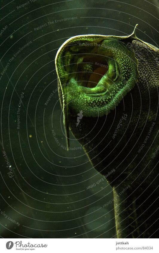 Küss mich! Wasser Tier Luft Mund Fisch Küssen Lebewesen Loch atmen Glätte Öffnung saugen Zärtlichkeiten Kieme Speiseröhre Wels