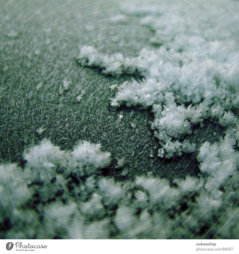 frost I Winter Schnee Wetter Eis Frost kalt Klima Eiskristall Raureif gefroren Eiszeit Farbfoto Gedeckte Farben Außenaufnahme Detailaufnahme Makroaufnahme