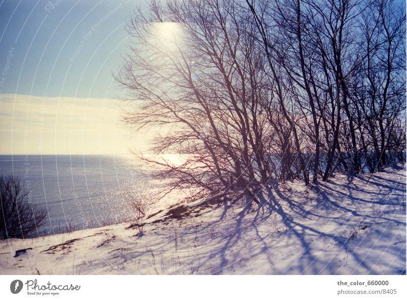 Frosted Tree Winter Baum Wasser