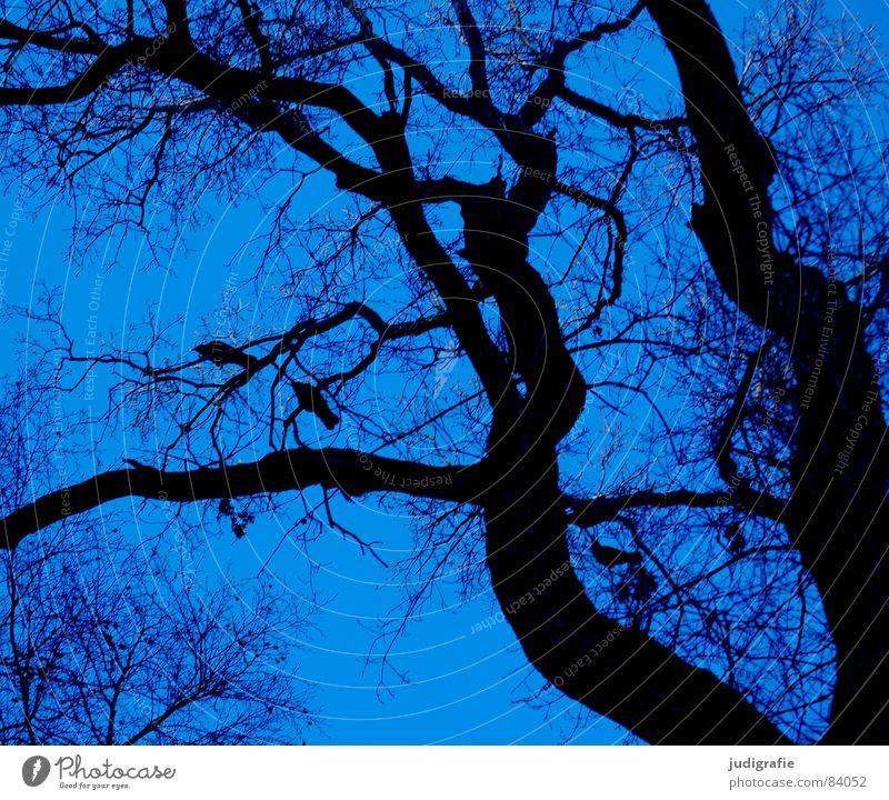 Drei Krähen Baum Wald Rabenvögel schwarz Vogel Wachstum netzartig Umwelt Wildnis Winter Himmel sitzen Ast Zweig Linie Leben Natur Baumstamm