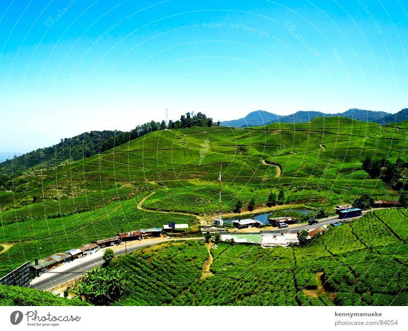 Tea Plantation groß Indonesien Jakarta