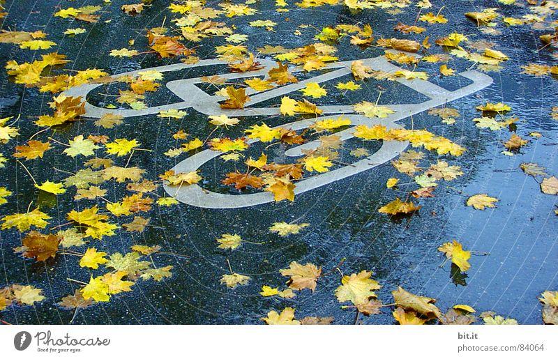 BOULEVARDBLÄTTER Herbst schlechtes Wetter Regen Verkehrswege Wege & Pfade Zeichen Schilder & Markierungen Verkehrszeichen nass gelb Ahorn Ahornblatt Fahrradweg