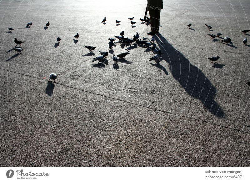 Taubenbeschwörer I. Sonne Winter ruhig schwarz Wärme Senior Vogel Zufriedenheit Pause Physik Frieden Regenschirm Männlicher Senior Fressen Taube füttern