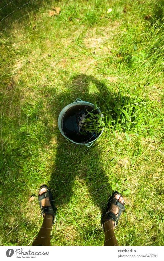 Schatten mit Eimer Wasser Sommer Sonne Wiese Gras Garten Beine Fuß stehen Rasen Stengel Blumenstrauß Vase Stauden Fotografieren Blütenstauden