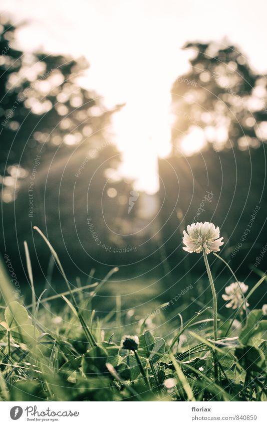 abendsonnenlicht II Natur Stadt Pflanze grün Sommer Erholung Blume Umwelt Leben Wiese Gras Beleuchtung Glück Park Stadtleben Wachstum