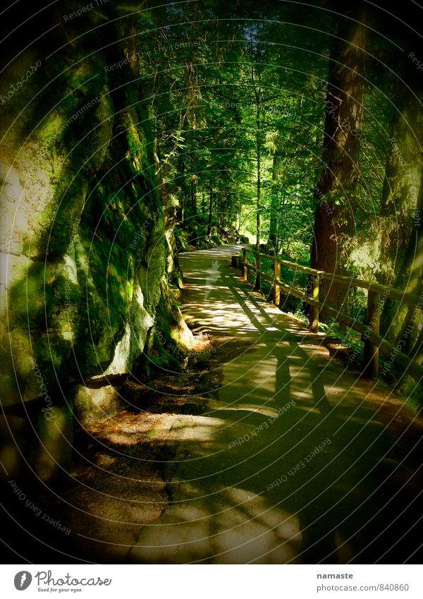 deep in the black forest Umwelt Natur Landschaft Pflanze Sommer Schönes Wetter Baum Blatt Grünpflanze Wald Menschenleer braun mehrfarbig gelb gold grün