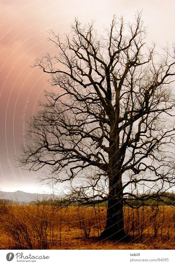 horrorbaum Steppe durcheinander bedrohlich rot Wolken braun Baum Geäst dunkel Angst Ast Gewalt Spuk Himmel hoch trist Wildtier