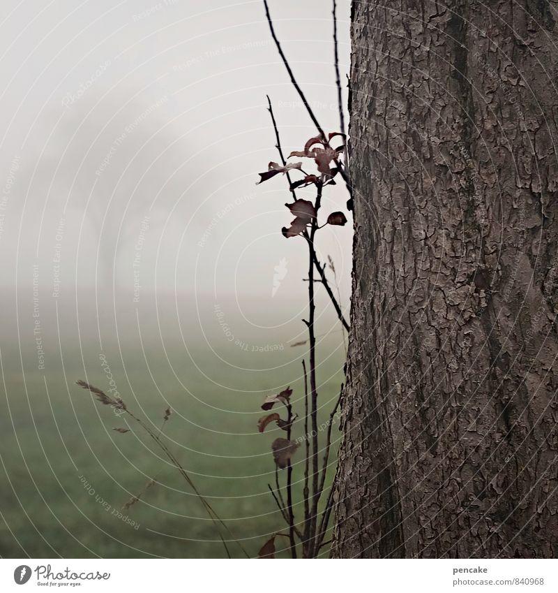 willkommen und abschied Natur Baum Einsamkeit Landschaft Herbst Gras Feld Nebel Klima Urelemente Jahreszeiten Baumstamm Baumrinde Abschied Nebelstimmung