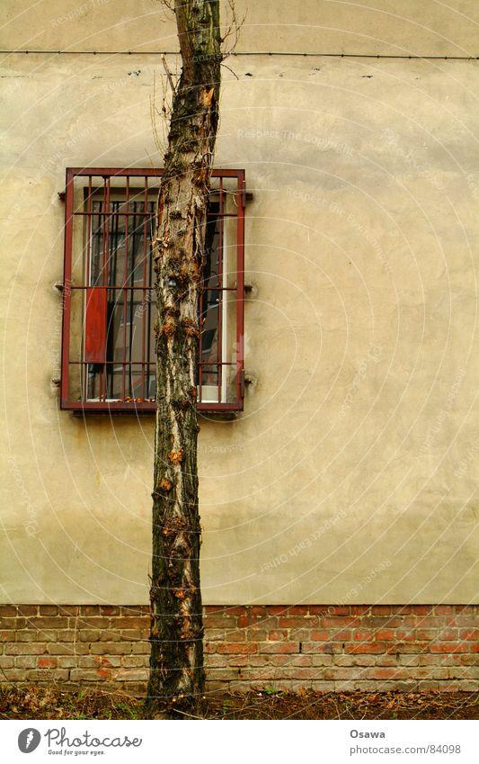 Wand - Fenster - Baum Pflanze Gitter Putz Mauer Haus Gebäude Vorhang Gardine Baumrinde grau Pflanzenteile Binderstein Fensterscheibe Botanik Haushaltsloch