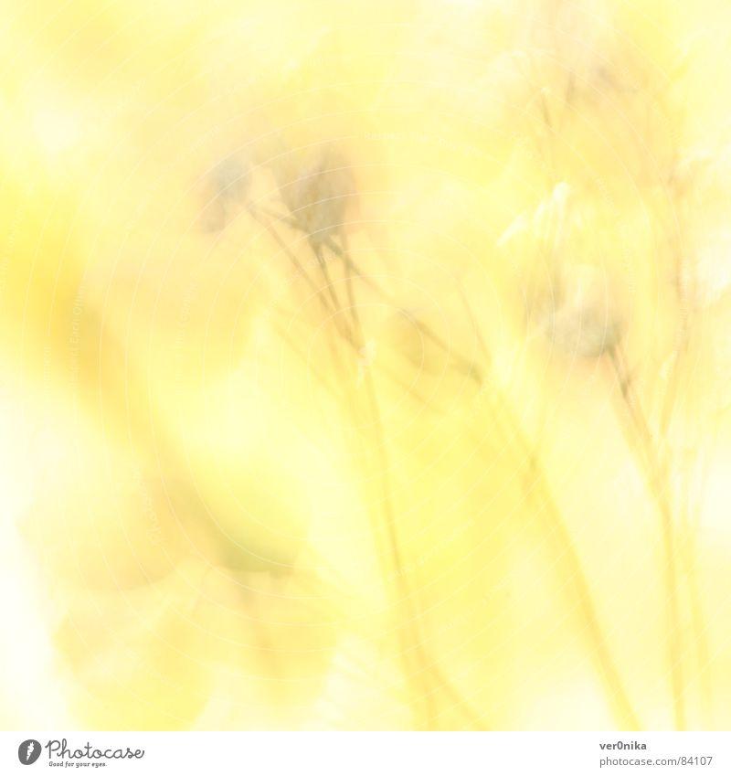 Sommer Blume Feld Sonne gelb Licht Physik Wärme Wiesenblume
