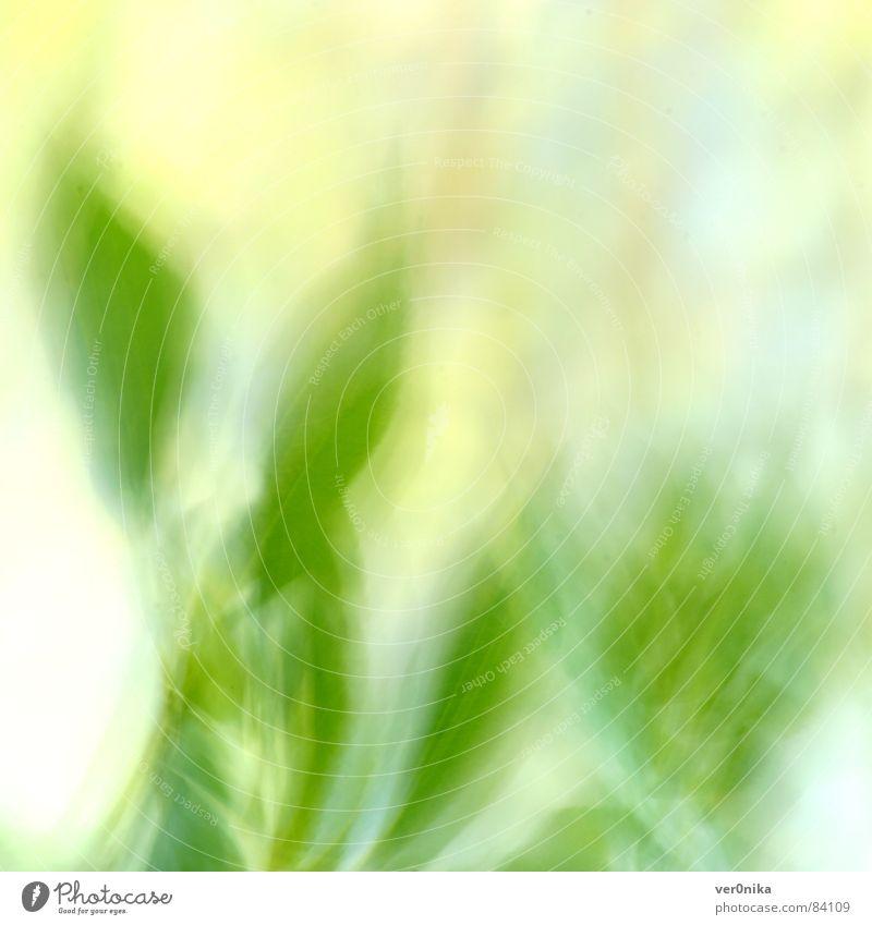 Frühling Natur Sonne Blatt Wiese Gras Feld Seil