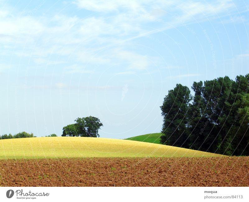 ackergold pflügen Feld Baum Wald Horizont Sonne Schatten Verlauf Hügel Wiese gelb braun grün Landwirtschaft beige Erde Umwelt Wäldchen Aussicht Gras Ackerbau