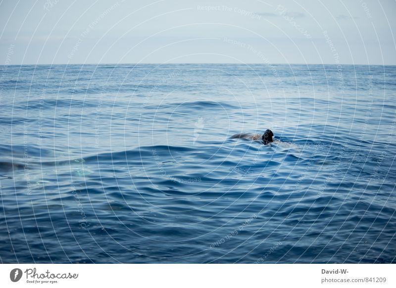 Freiheit blau Wasser Meer Tier Schwimmen & Baden Wellen Insel Ausflug Tiergruppe Freundlichkeit Unendlichkeit Neugier Fisch Schifffahrt Umweltschutz