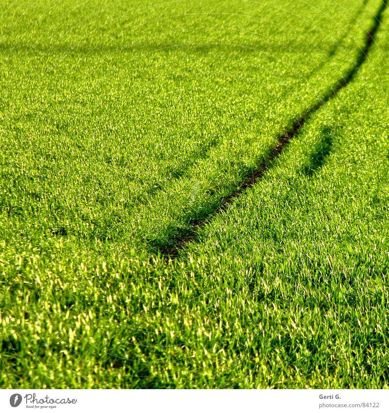 Strich in der Landschaft grün Sommer Ernährung Gras Wege & Pfade Linie Feld Wind Lebensmittel verrückt Quadrat Landwirtschaft Ernte Halm Korn diagonal