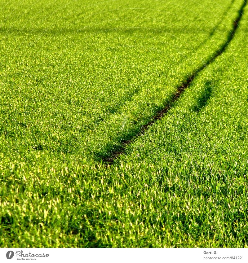 Strich in der Landschaft Rohstoffe & Kraftstoffe Zerealien Landwirtschaft Feld Lebensmittel Kornfeld grün Wind Sommer Quadrat diagonal Aussaat Linie Furche