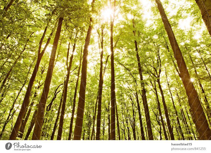 Green.Screen Ferien & Urlaub & Reisen Sommer Baum Erholung ruhig Ferne Wald Leben Frühling Gesundheit Zufriedenheit Tourismus wandern Ausflug Abenteuer Wellness