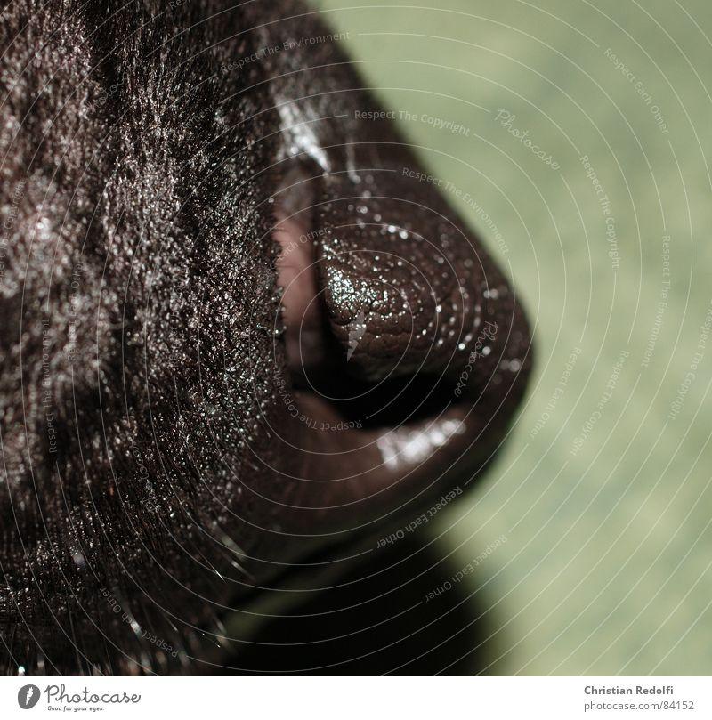 Schnuffi Hund Schnauze schwarz grün Nase Mund Haare & Frisuren Tier Organ Körperteile Makroaufnahme Nahaufnahme
