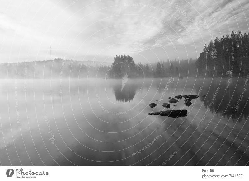 morgens in Schweden Pflanze schön weiß Wasser Sommer Baum Einsamkeit ruhig Wolken dunkel schwarz kalt natürlich Holz Freiheit Stein