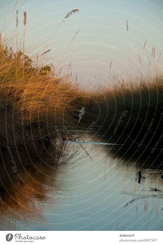 verborgener Pfad Natur Landschaft Pflanze Wasser Wolkenloser Himmel Sonnenaufgang Sonnenuntergang Sonnenlicht Schönes Wetter Wärme Gras Sträucher Wildpflanze