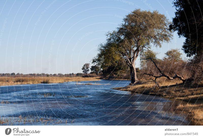 Fluss abwärts Natur Landschaft Erde Wasser Himmel Wolkenloser Himmel Sommer Schönes Wetter Pflanze Baum Gras Sträucher Flussufer Ferien & Urlaub & Reisen