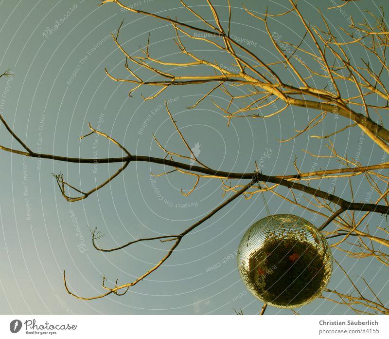 Ficus Disco Discokugel Baum gelb Spiegel Globus Tanzlokal Planet Leuchtrakete Kugel Ast Himmel Zweig