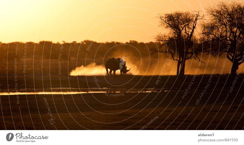 Naturgewalt Umwelt Sonnenaufgang Sonnenuntergang Schönes Wetter Dürre Tier 1 ästhetisch außergewöhnlich Kitsch gold Kraft Macht Mut Tatkraft Leben unbeständig