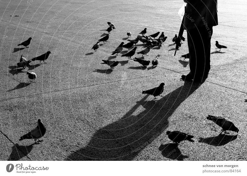 Taubenbeschwörer II. Sonne Winter ruhig schwarz Wärme Senior Vogel Zufriedenheit Pause Physik Regenschirm Gelassenheit Männlicher Senior Abenddämmerung Fressen