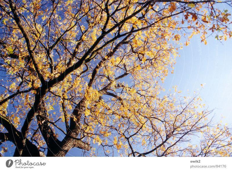 Orange und blau Farbfoto mehrfarbig Menschenleer Textfreiraum rechts Tag Kontrast Sonnenlicht Blick nach unten Umwelt Natur Landschaft Pflanze Luft