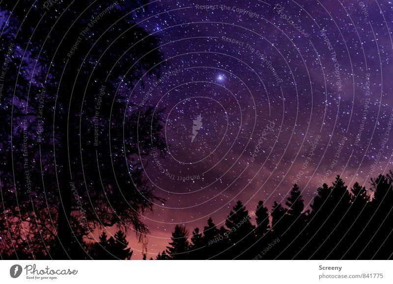 Into the sky #1 Natur Landschaft Urelemente Himmel Nachthimmel Stern Wald leuchten dunkel gigantisch glänzend hell Idylle Optimismus Galaxie Farbfoto