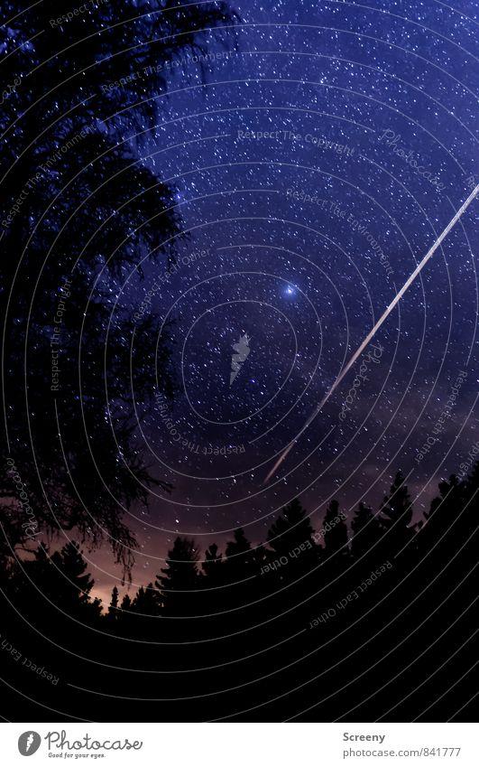 Into the sky #2 Natur Pflanze Urelemente Himmel Wolkenloser Himmel Nachthimmel Stern Wald glänzend leuchten gigantisch Unendlichkeit Optimismus ruhig entdecken