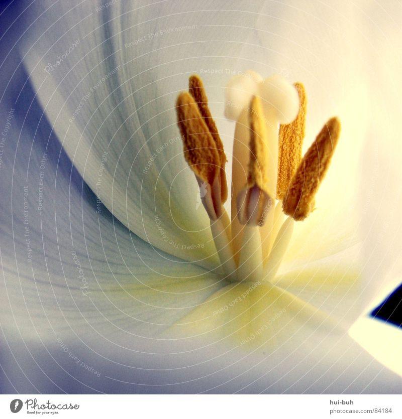 Tulpenzauber Natur schön Pflanze Blume Farbe Freiheit Blüte Umwelt Luft Erde Erde schlafen frisch Wachstum weich Vergänglichkeit