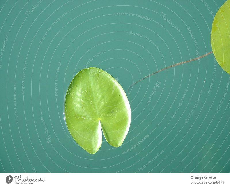 Seerosenblatt Blatt grün Sonnenlicht Ferien & Urlaub & Reisen Wasser