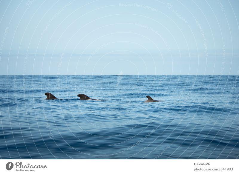 Delfinschule Natur blau Wasser Meer Tier Ferne Umwelt Küste Schwimmen & Baden Zusammensein Wellen beobachten Tiergruppe Abenteuer Unendlichkeit entdecken