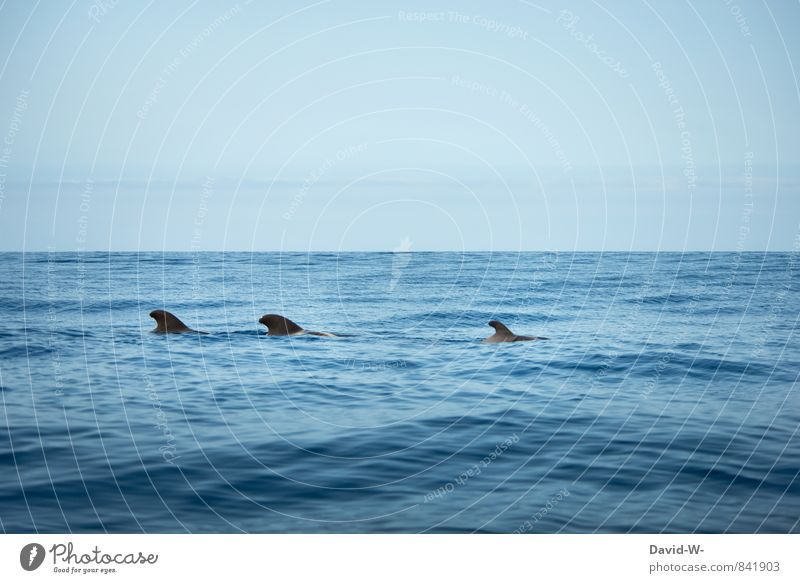 Delfinschule Umwelt Natur Wasser Wellen Küste Meer Pazifik Kreuzfahrt Segelboot Tier Haifisch Delphine Säugetier 3 Tiergruppe Herde Schwarm Rudel Tierfamilie