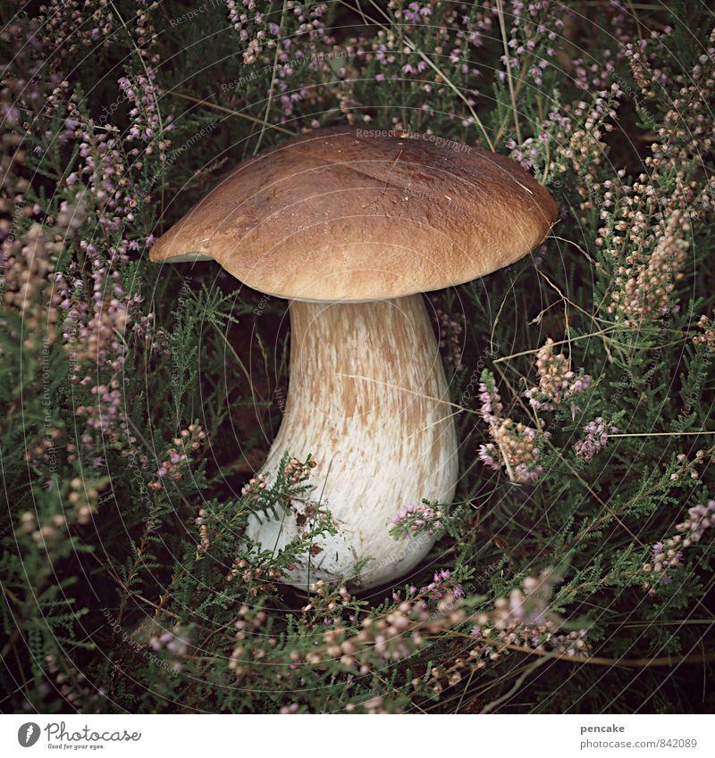 steini Natur Herbst Gesundheit Lebensmittel genießen Suche Pilz Vegetarische Ernährung Nutzpflanze finden Italienische Küche Heidekrautgewächse Steinpilze