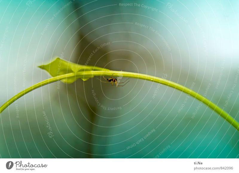 Under The Bridge Pflanze Wildpflanze Garten Park Wiese Tier Wildtier Spinne Jagd laufen rennen wandern authentisch Ekel gruselig klein blau gelb grün türkis