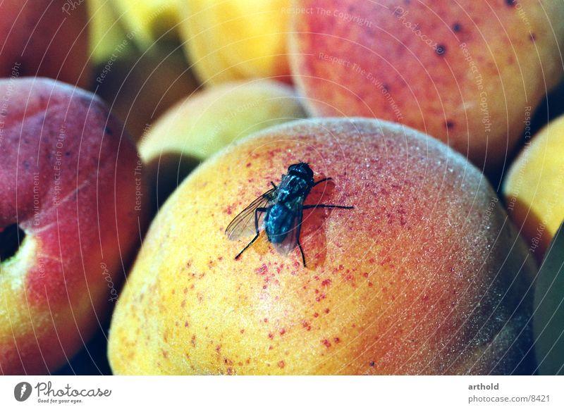 Süße Landung fliegen Frucht Verkehr süß Insekt lecker Stillleben saftig Aprikose Plagegeist Obstkorb