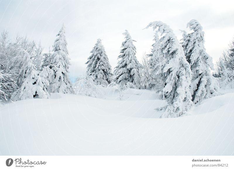 winterbäume - winterträume Ferien & Urlaub & Reisen weiß Baum Landschaft Winter Schnee grau Freizeit & Hobby Ausflug geheimnisvoll fahren Tanne Skifahrer unklar