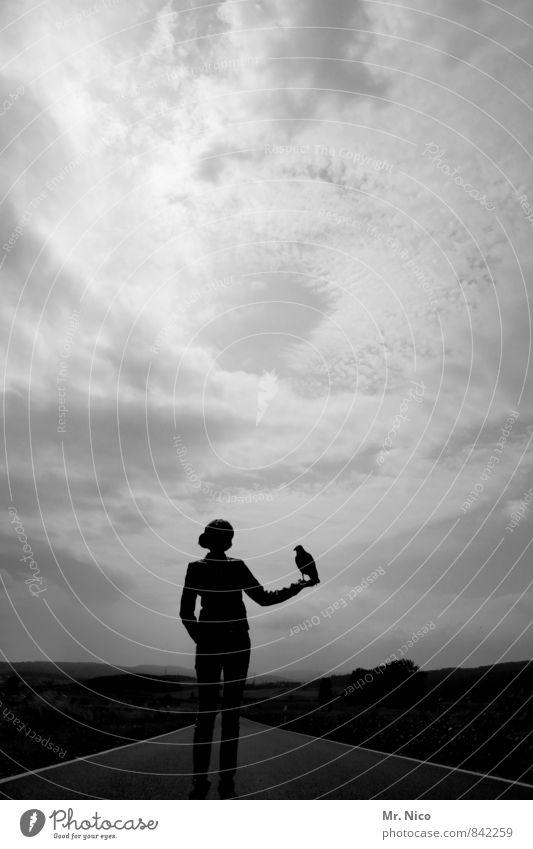 Du hast doch 'n Vogel! Mensch Frau Himmel Natur Ferien & Urlaub & Reisen Einsamkeit Landschaft Wolken Tier Ferne dunkel Umwelt Erwachsene Straße feminin Wege & Pfade