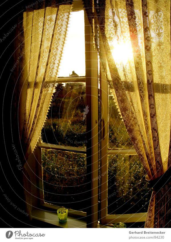 Abends ab 7 ist die Welt wieder in Ordnung Sonne gelb Herbst Fenster Wärme orange Freundlichkeit Vorhang gemütlich Geborgenheit Abenddämmerung Gardine herzlich Himmelskörper & Weltall Abendsonne herausschauen