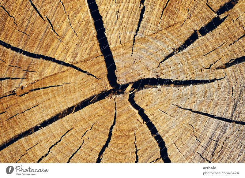 Baumquerschnitt 2 Holz Baumstamm Riss springen Furche Querschnitt Spalte