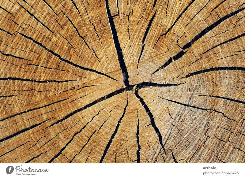 Baumquerschnitt 1 Holz Baumstamm Riss springen Furche Querschnitt Spalte