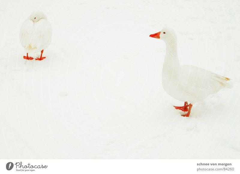 Mister Universum Natur Wasser weiß schön rot Tier Winter Umwelt kalt Schnee See Vogel Eis orange fliegen frisch
