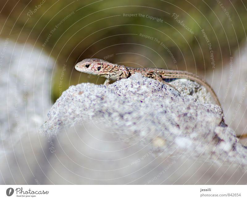 kritisch Tier Tierjunges Wärme grau Denken Stein braun träumen Wachstum Wildtier beobachten Kommunizieren Wandel & Veränderung Abenteuer Zeichen Neugier